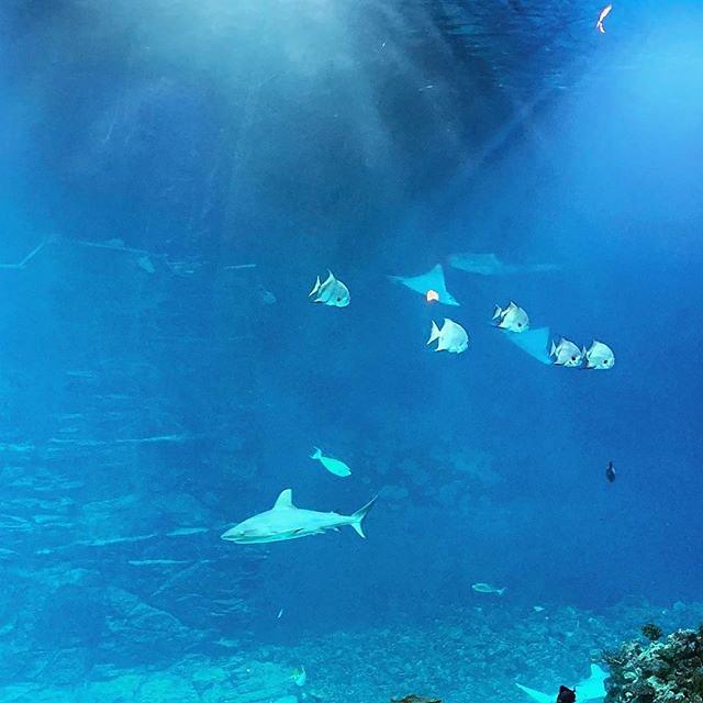#hagenbeck #tropenaquarium #tropenaquariumhagenbeck #hamburg #shark #fish